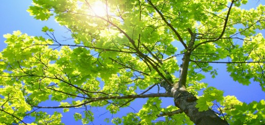 sunny_tree_branches_wallpaper_plants_nature_wallpaper_1600_900_widescreen_1300