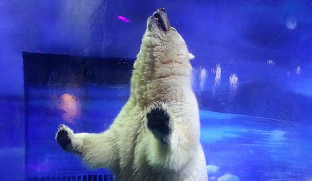 polar-bear1-1200x695