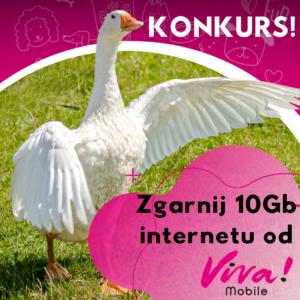 Weź udział we wspólnym konkursie Viva Mobile i bloga o psach - Prozwierz - zgarnij dodatkowe 10Gb do swojego abonamentu w sieci Viva Mobile!