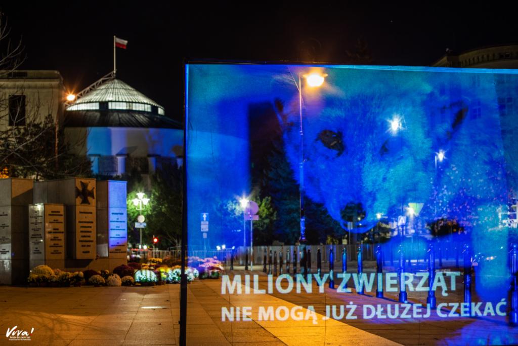 Hologram pod Sejmem z apelem do polityków o szybkie wprowadzenie w Polsce zakazu hodowli zwierząt na futra